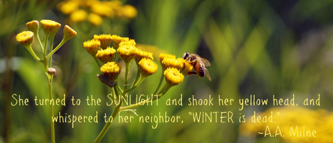 Sunlight and Bees